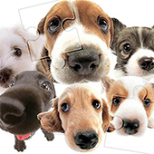 Cute Dog Jigsaw